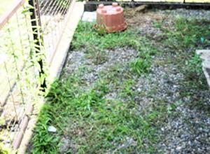 郡山市シルバー人材「草むしり・草刈り」