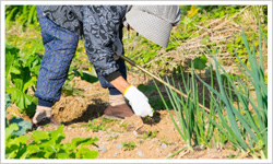 農作業の手伝い - シルバー人材郡山市