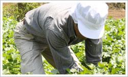 草むしり・農作業・ガーデニング
