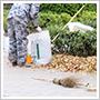 落ち葉清掃サービスについて詳しくはこちら
