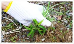 草取り・草むしり・除草サービス内容1 - 郡山市のシルバー人材