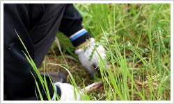 草取り・草むしりサービス内容2 - 郡山市のシルバー人材