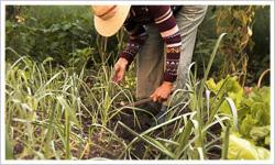 草取り・草むしりサービス内容4 - 郡山市のシルバー人材ガーデニング