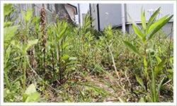 草取り・草むしりサービス内容3 - 郡山市のシルバー人材