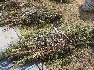 束ねた草はゴミ処理場へ